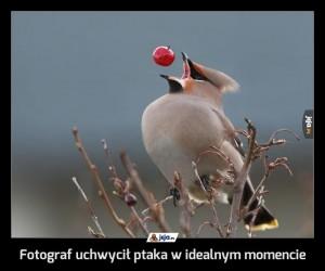Fotograf uchwycił ptaka w idealnym momencie