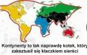 Kontynenty to tak naprawdę kotek