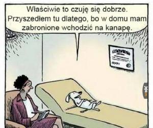 Psia wizyta u psychiatry