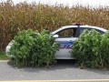 Kamuflaż policji