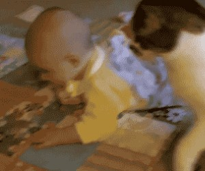Dwulicowy kot