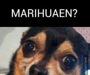 Marihuaen?