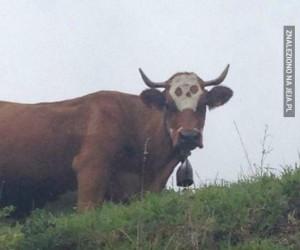 Hardkorowa krowa