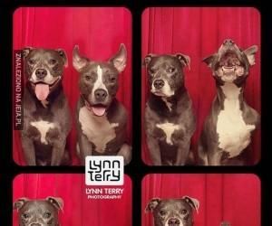 Psy w foto-budkach