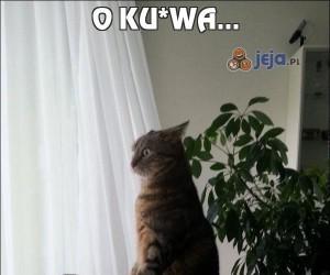 O ku*wa...