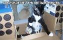 Zadarliście nie z tym kotem, co trzeba!