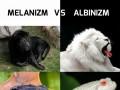 Melanizm vs albinizm