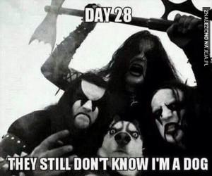 Dzień 28