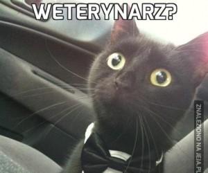 Weterynarz?