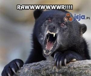 Niedźwiadek się zdenerwował