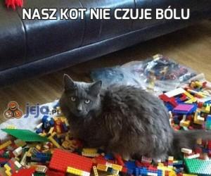 Nasz kot nie czuje bólu