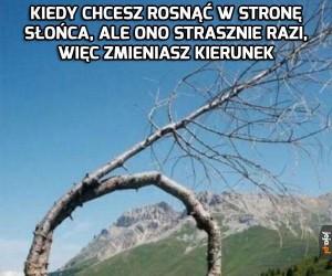 Niezdecydowane drzewo
