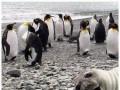 Zwierzęta, zwierzęta wszędzie