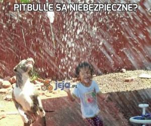 Pitbulle są niebezpieczne?