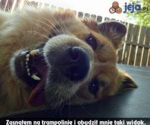 Gdy zaśniesz w zasięgu psa...