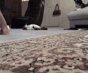 Jedzie koteł z daleka