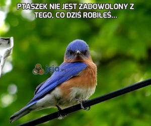 Ptaszek nie jest zadowolony z tego, co dziś robiłeś...
