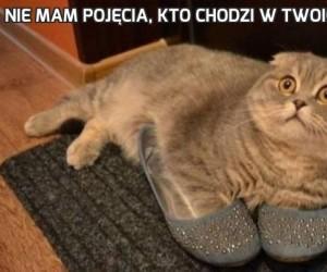 Nie mam pojęcia, kto chodzi w twoich butach!