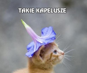 Kapelusz dla kota