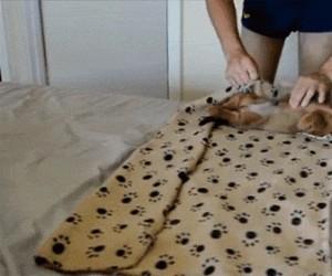 Jak zapakować psa