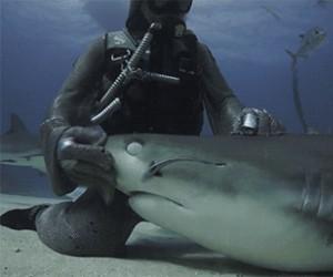Pogłaskać rekina? żaden problem!