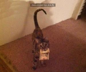 Jak koteł coś chce, to musi to mieć