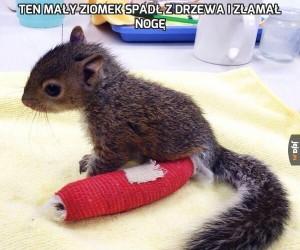 Ten mały ziomek spadł z drzewa i złamał nogę