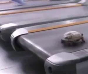 Szybciej, szybciej!