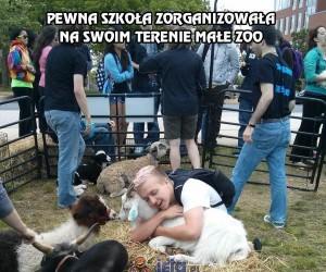 Pewna szkoła zorganizowała na swoim terenie małe zoo