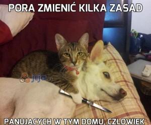 Nie przygarniaj kota z ulicy