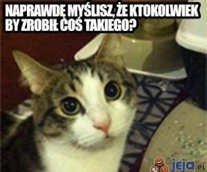 Nie kradnij kotu!
