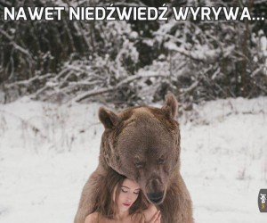 Nawet niedźwiedź wyrywa...