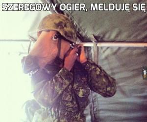 Szeregowy Ogier, melduję się