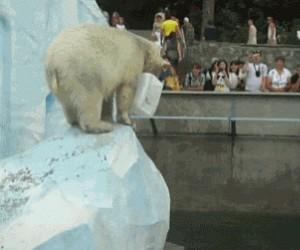 Jak się bawią niedźwiedzie polarne