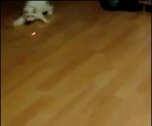 Kicia lata za laserem