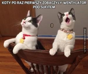 Koty po raz pierwszy zobaczyły wentylator pod sufitem