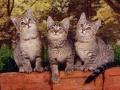 Zaciekawione koty