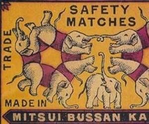 Policz słonie
