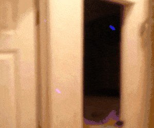 Lemur ninja