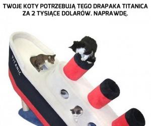 Titanic w sam raz dla Twoich kotów