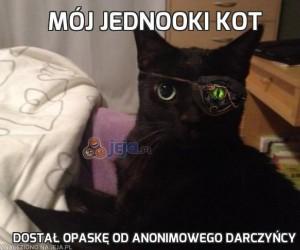 Mój jednooki kot