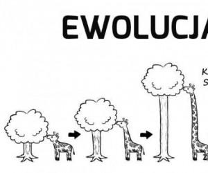 Nieugięte żyrafy