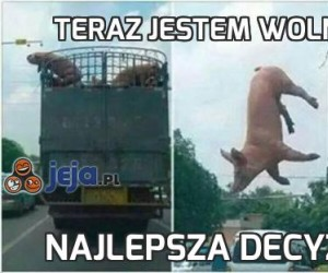 Teraz jestem wolną świnią!