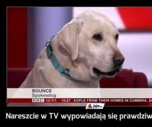 Nareszcie w TV wypowiadają się prawdziwi eksperci