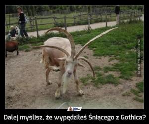 Dalej myślisz, że wypędziłeś Śniącego z Gothica?