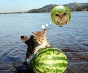Koty też marzą