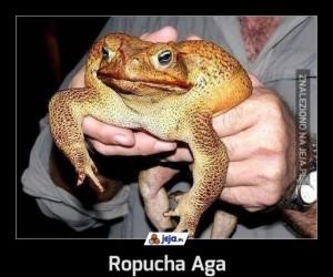 Ropucha Aga