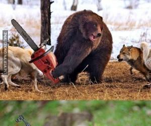 Uzbrojone zwierzęta