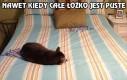 Koty to jednak palanty