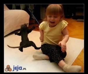 Kot ninja uderza